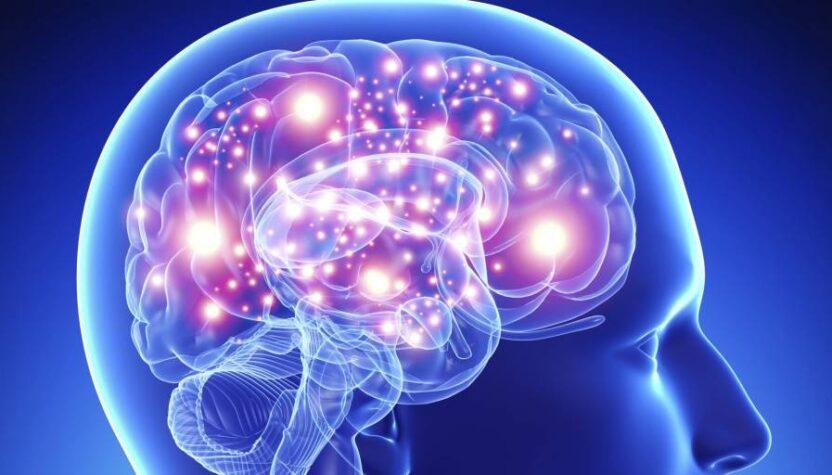 Как развивается мозг ребенка: мифы и реальность